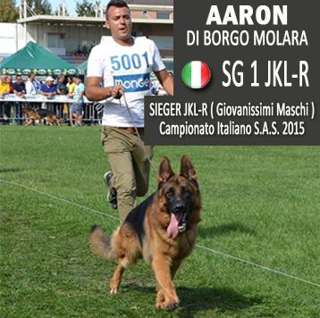 aaron-news-ita
