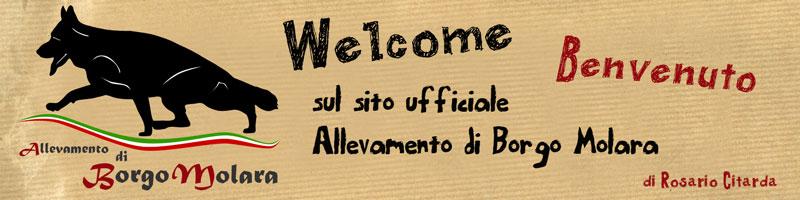 benvenuto-allevamento-borgo-molara